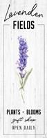 Lavender Fields Framed Print