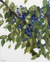 Blueberries Fine Art Print