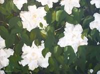 Gardenias Fine Art Print