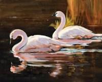 Swans Fine Art Print