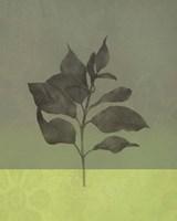 Green Leaves Fine Art Print