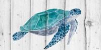 Turtle II Fine Art Print