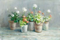 Farmhouse Geraniums Fine Art Print