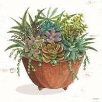 Terracotta Succulents I Fine Art Print