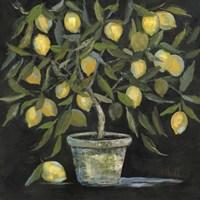 Lemon Tree Fine Art Print