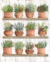 Succulents on Shelves Fine Art Print