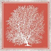 Coastal Coral on Red I Fine Art Print