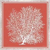 Coastal Coral on Red II Fine Art Print