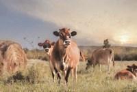 Cow Photobomb Fine Art Print