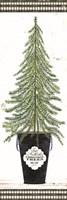 Fir Tree Fine Art Print