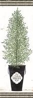 Cedar Tree Fine Art Print