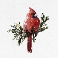 Cardinal with Snow I Fine Art Print