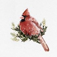 Cardinal with Snow II Fine Art Print