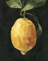 Dark Lemon I Fine Art Print