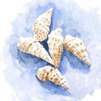Shell Impressions I Framed Print