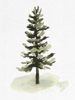 Watercolor Pine II Fine Art Print