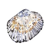 Simple Shells IV Framed Print