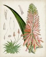 Delicate Tropicals I Fine Art Print