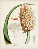 Delicate Tropicals III Fine Art Print