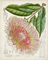 Delicate Tropicals IV Fine Art Print
