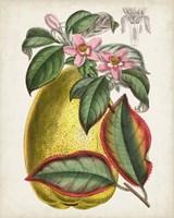 Delicate Tropicals V Fine Art Print