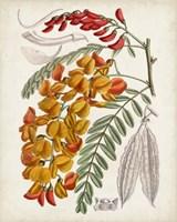 Delicate Tropicals IX Fine Art Print