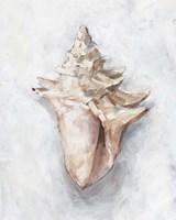 White Shell Study I Framed Print
