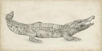 Crocodile Sketch Fine Art Print