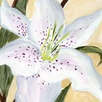 White Lily I Framed Print