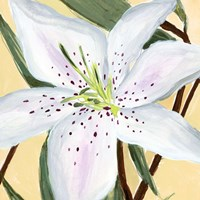 White Lily II Framed Print