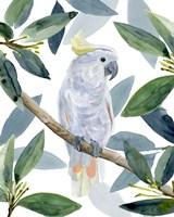 Cockatoo Perch I Fine Art Print