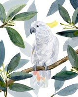 Cockatoo Perch II Fine Art Print