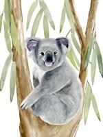 Woodland Koala II Fine Art Print