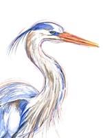 Heron's Glance I Framed Print