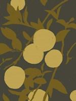 Golden Satsuma I Framed Print