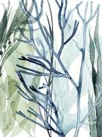 Sea Leaves II Framed Print