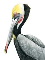 Watercolor Pelican II Fine Art Print
