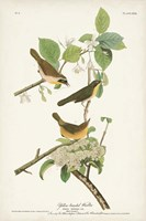 Pl. 23 Yellow-breasted Warbler Fine Art Print