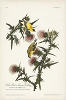 Pl. 33 American Gold Finch Framed Print
