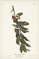 Pl. 85 Yellow-throated Warbler Fine Art Print