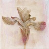 Remembered Flowers I Fine Art Print