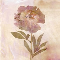 Remembered Flowers II Fine Art Print
