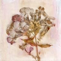 Remembered Flowers III Fine Art Print