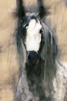 Blended Horse II Fine Art Print