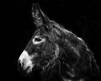 Donkey Portrait I Fine Art Print