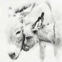 Donkey Portrait III Framed Print