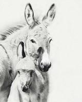 Donkey Portrait V Fine Art Print