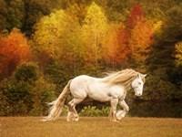 Golden Lit Horse VI Fine Art Print