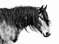 Black and White Horse Portrait III Fine Art Print