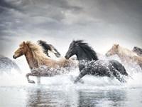 Horse Run V Fine Art Print